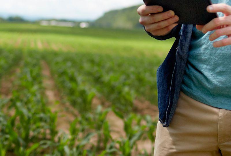 Zoom de Innovación Tecnológica sobre TASACIONES AGROPECUARIAS